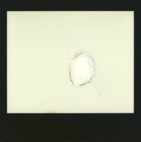 scan of polaroid
